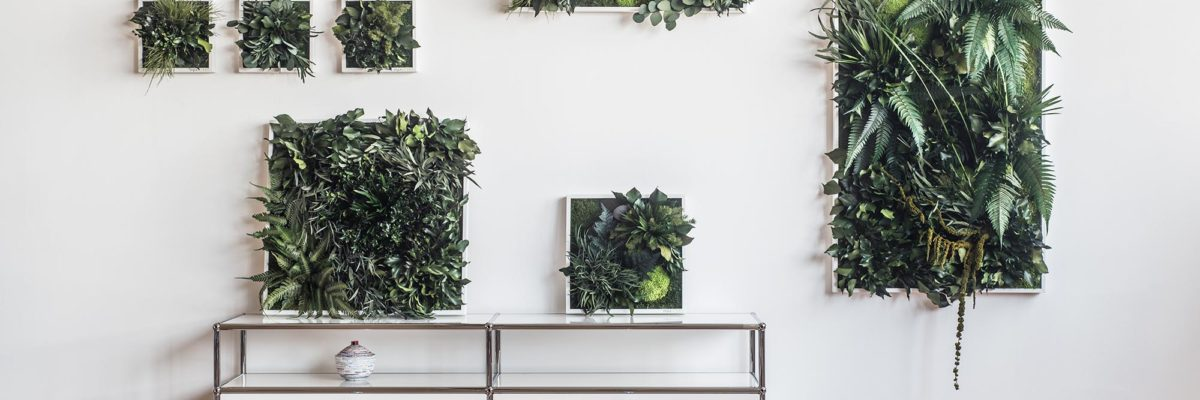 Flowers in frames on a white wall
